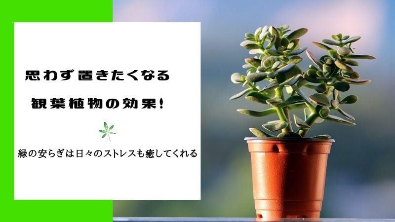 観葉植物が持つさまざまな健康効果