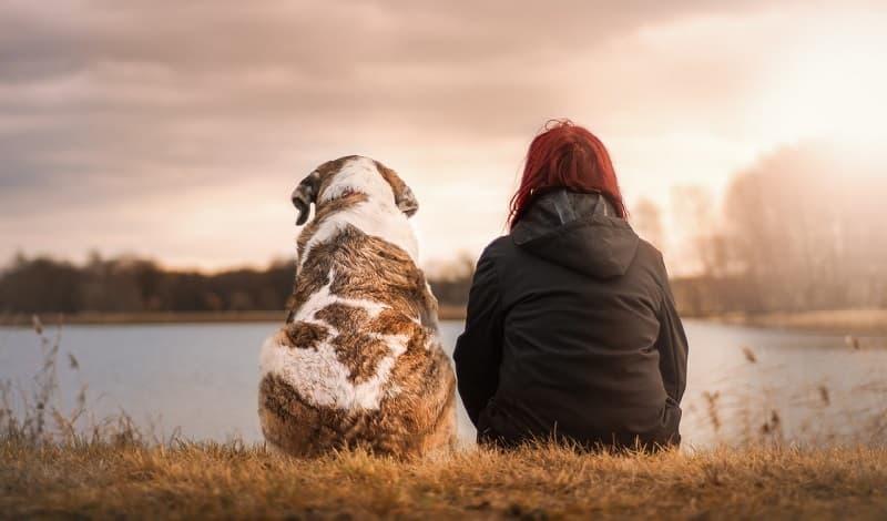 動物・ペットと触れ合うことで癒し効果を得られる!