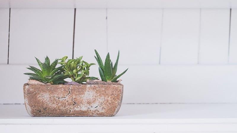 観葉植物を自宅やオフィスに飾るケースが増加中