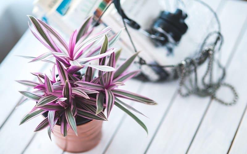 観葉植物を置きたくなる5つの効果・メリット