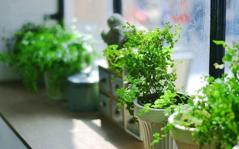 植物にはリラックス効果がある