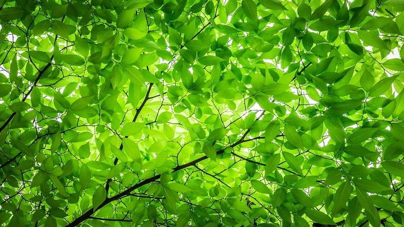 緊張を和らげる緑(グリーン)