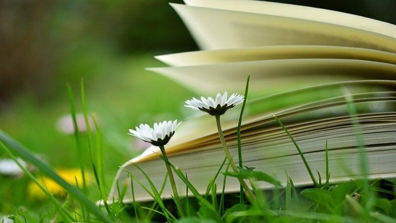 小説や漫画を読んで読書の秋を満喫