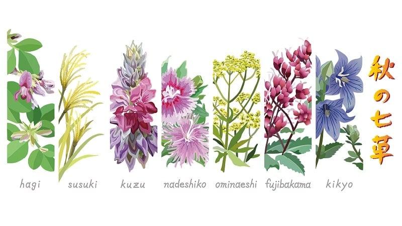 秋の七草の種類
