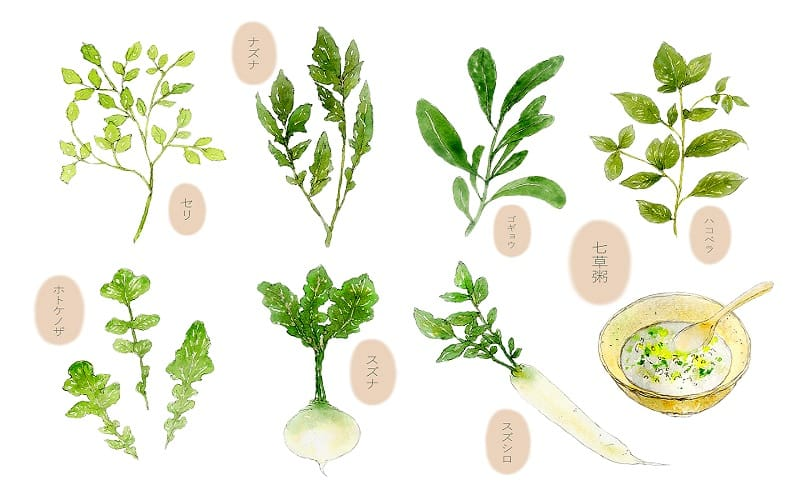 春の七草の7種類の植物