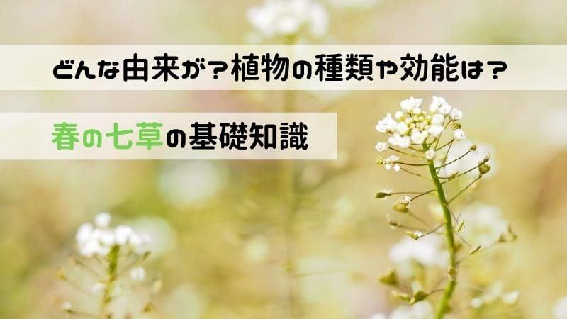 春の七草の由来と種類。植物の効能や覚え方の解説