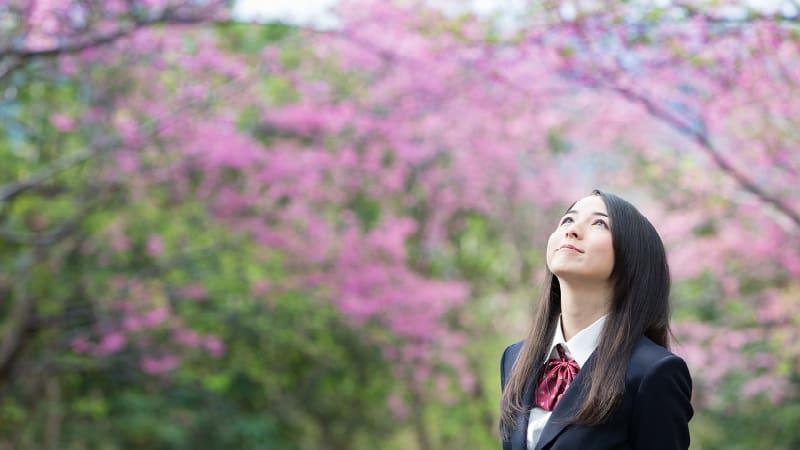 日本人が桜・花見が好きな理由:春の思い出を呼び起こす