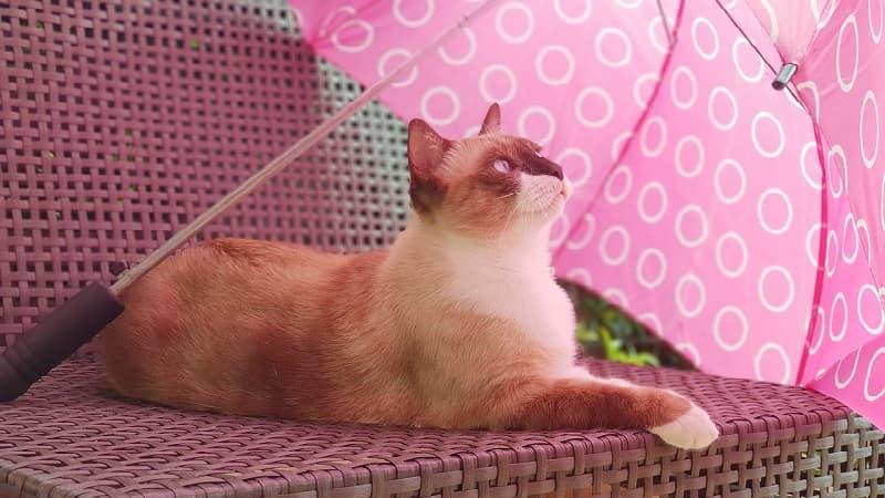 これからは男性も日傘を差す時代に!熱中症対策に有効