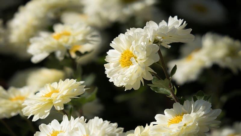 お盆花にピッタリの花の種類