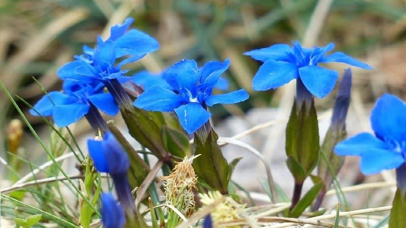 敬老の日に贈る定番の花は?