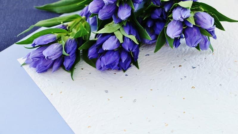 敬老の日にプレゼントには「お花ギフト」がおすすめ