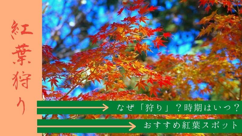 紅葉狩りの由来とおすすめスポット|どうして「狩り」?見頃はいつ?