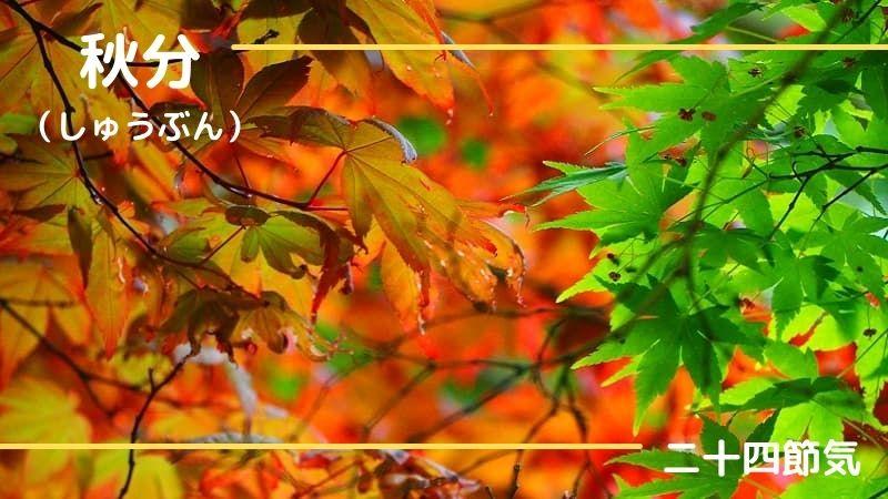 秋分の日の意味は?いつ?旬の食べ物・花・行事も紹介