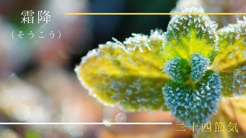 二十四節気「霜降(そうこう)」はいつ?旬の食べ物・草花・イベントも紹介